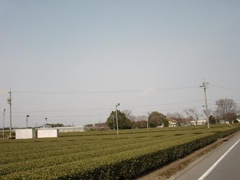 20130316-16.JPG